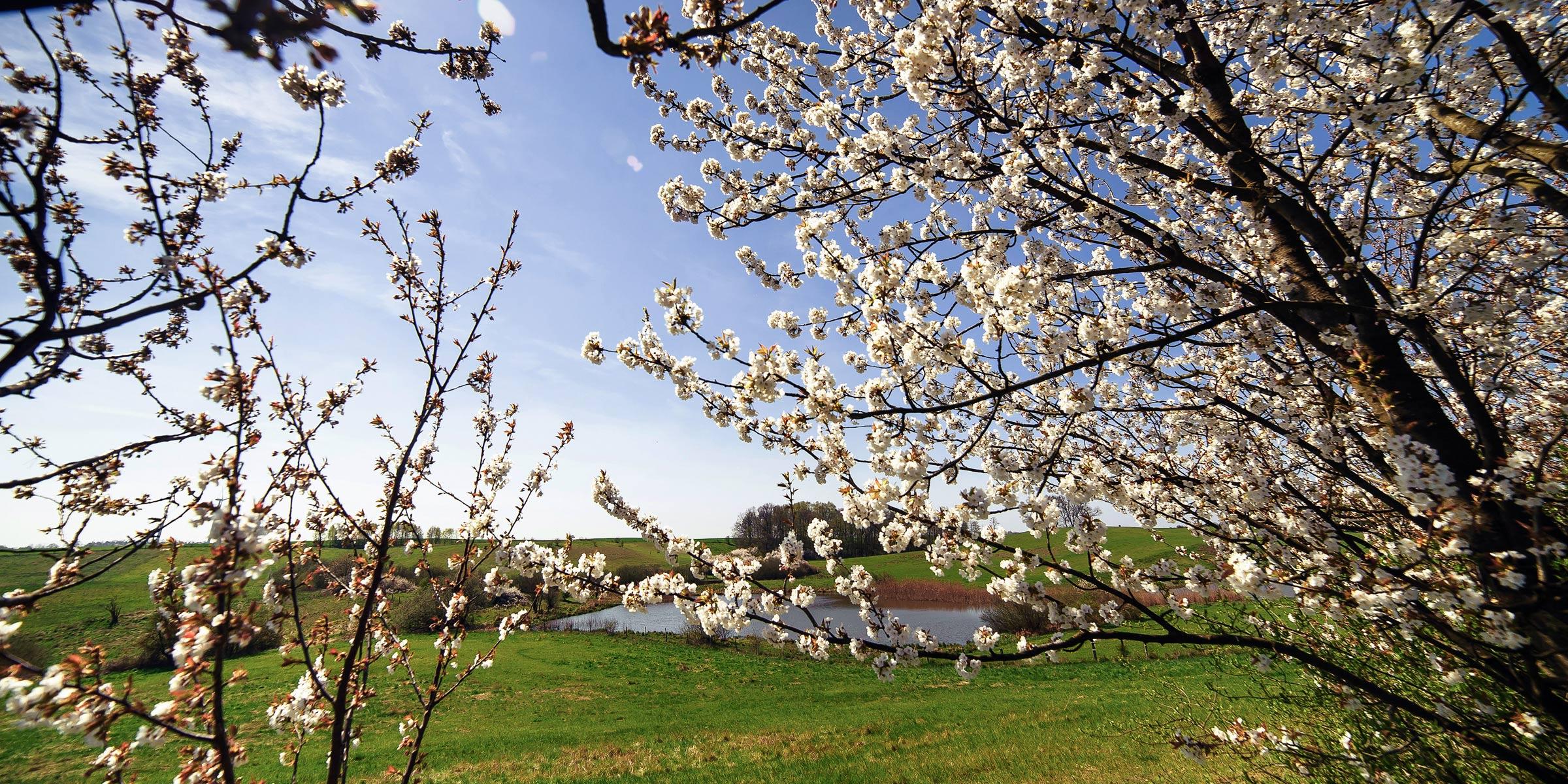 buckowseerinne-blüten