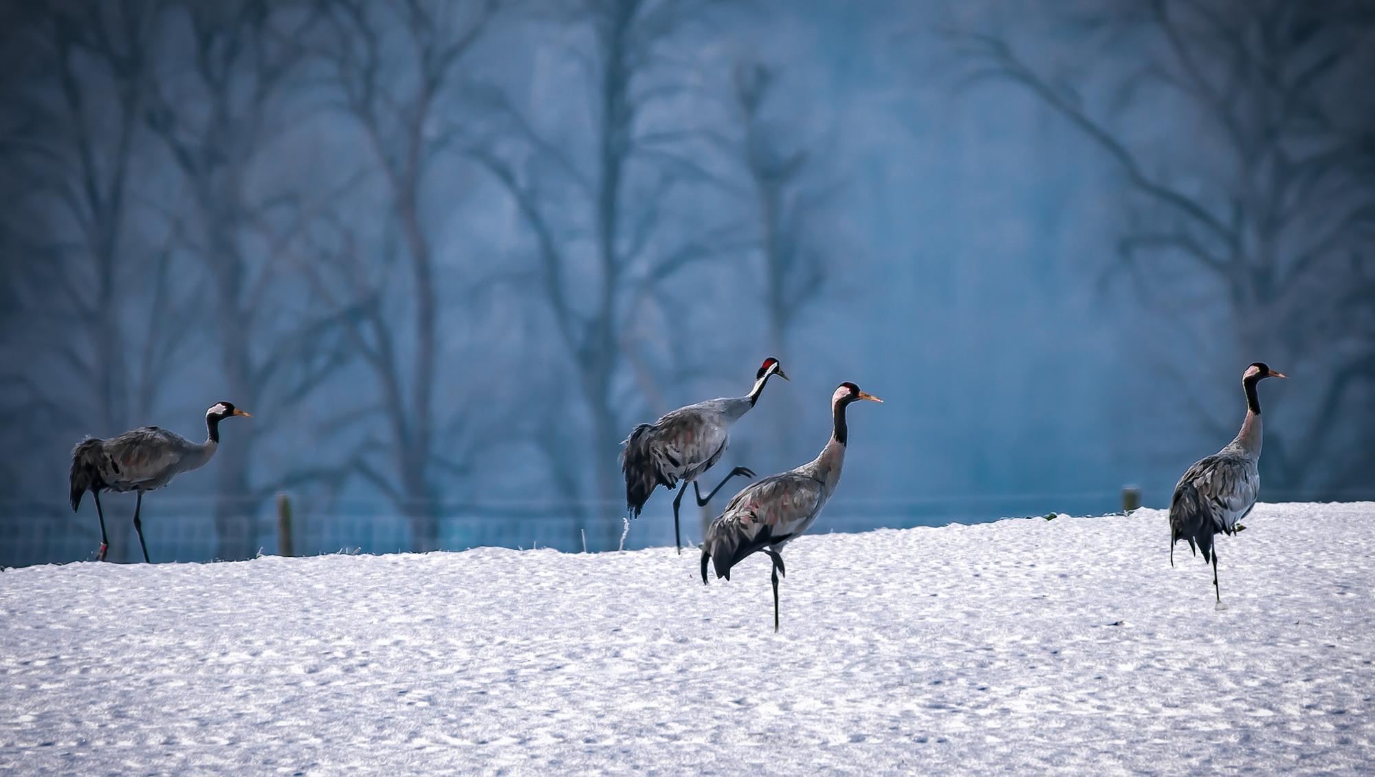 slider-winter6